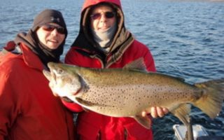 16.5lb. Brown Trout Caught on Bay of Quinte