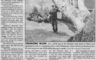 Picton Gazette article about fallen tree.