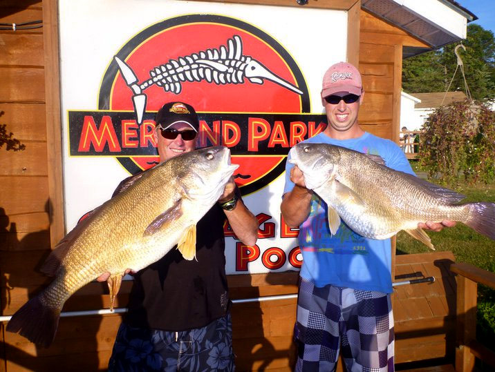 Monster Sheepheads caught casting!